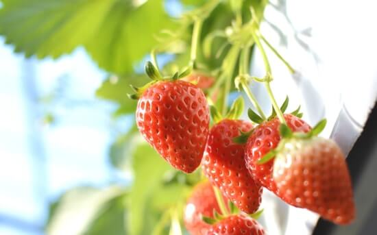 イチゴ鼻に炭酸水は非常に効果的に働いてくれます!