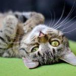 愛する猫の為のやさしいウォーターサーバー特集